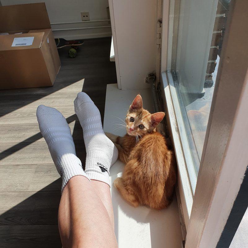 Nienke verhuisd kat
